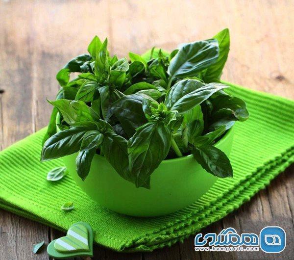 به یاری این سبزی می توانید پشه ها را از خود دور کنید
